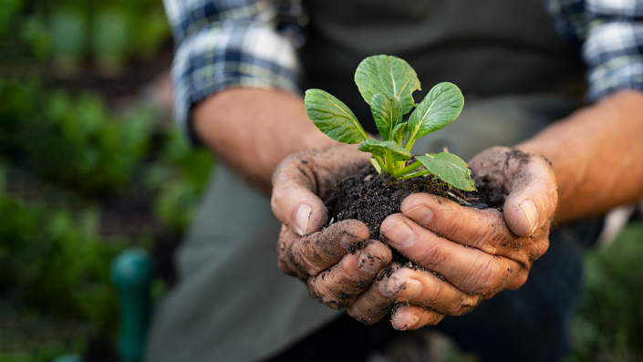 Farmer hands planting sprout